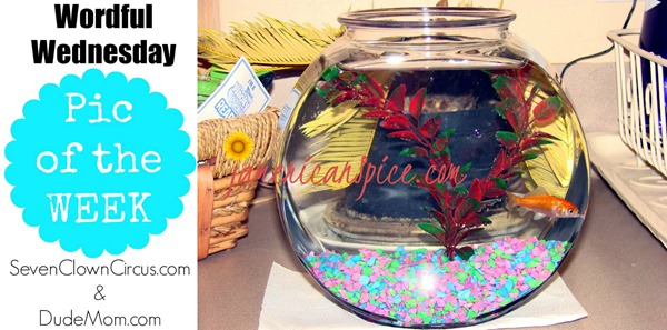 carnival goldfish
