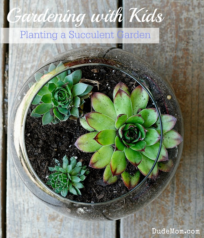 Gardening With Kids Diy Succulent Container Gardens