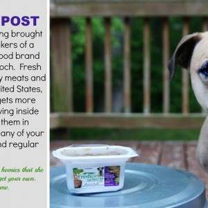 How to Potty Train a Puppy. #Giveaway
