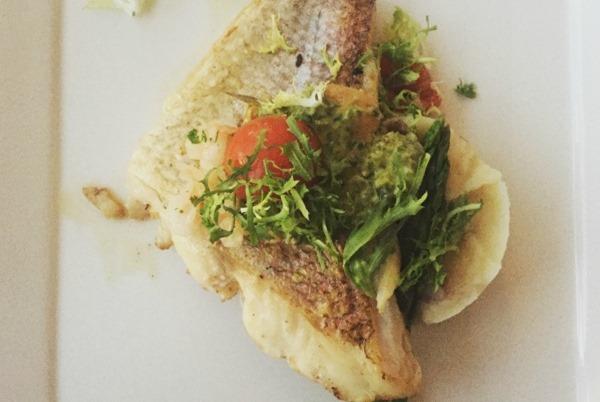 turks caicos fish