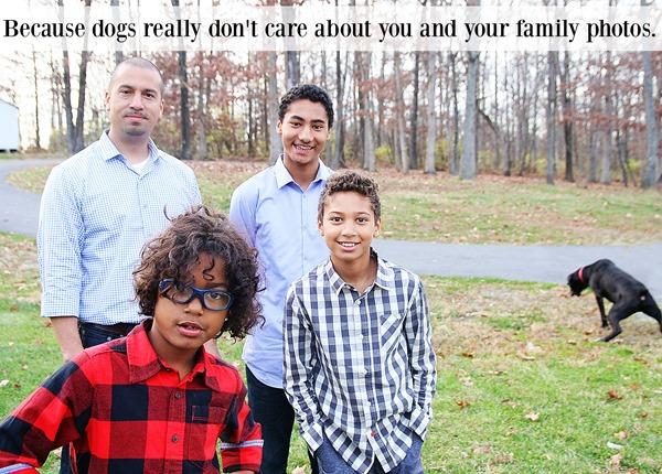 dog ruins photo